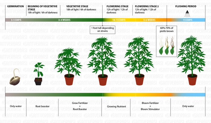 First time cannabis growers - Tips to succeed - Santyerbasi Blog