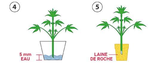 R aliser des boutures de cannabis tape par tape blog - Quelles sont les plantes que l on peut bouturer ...