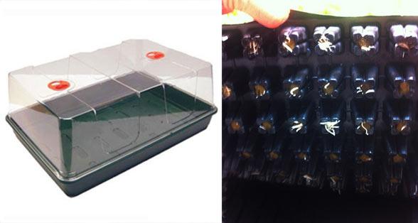 R aliser des boutures de cannabis tape par tape blog - Comment passer en floraison ...