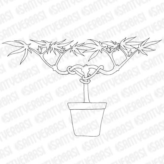 Main lining dans la culture du cannabis blog santyerbasi - Taille des orchidees apres floraison ...