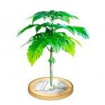 Culture de cannabis pas chère en extérieur