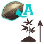 Estimular el crecimiento de variedades autoflorecientes