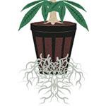 hidroponico marihuana