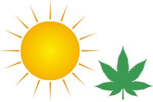 marijuana sun