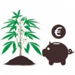 Cómo ahorrar dinero: Autocultivo vs Comprar marihuana