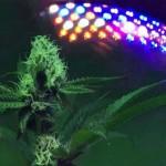 Cultivar marihuana con LEDs