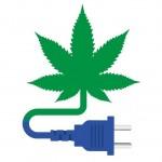 Consumo eléctrico de un cultivo de marihuana