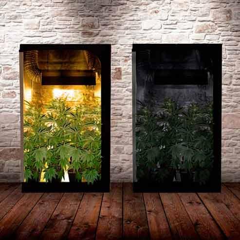 fotoperiodo cannabis