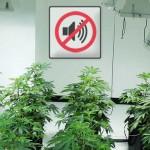 Insonorizar un cultivo de marihuana