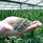 Abonos en polvo - Ahorrar en el cultivo