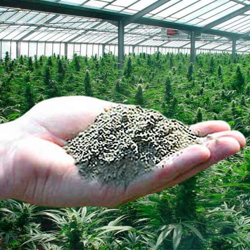 fertilizantes en polvo
