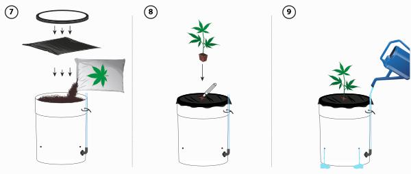 Regar cannabis