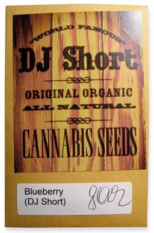 dj short Blueberry