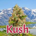 Kush - Orígenes de la genética