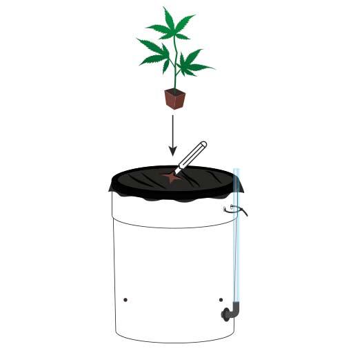 Sub riego cannabis