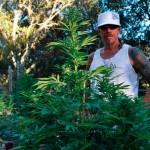 Subcool, una leyenda viva del cannabis