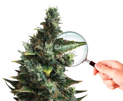 Marijuana and copyright